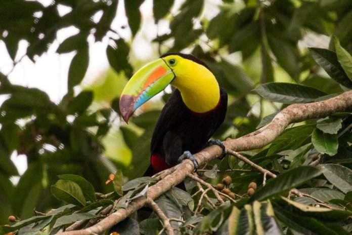 Guía De Viaje Costa Rica En 15 Días