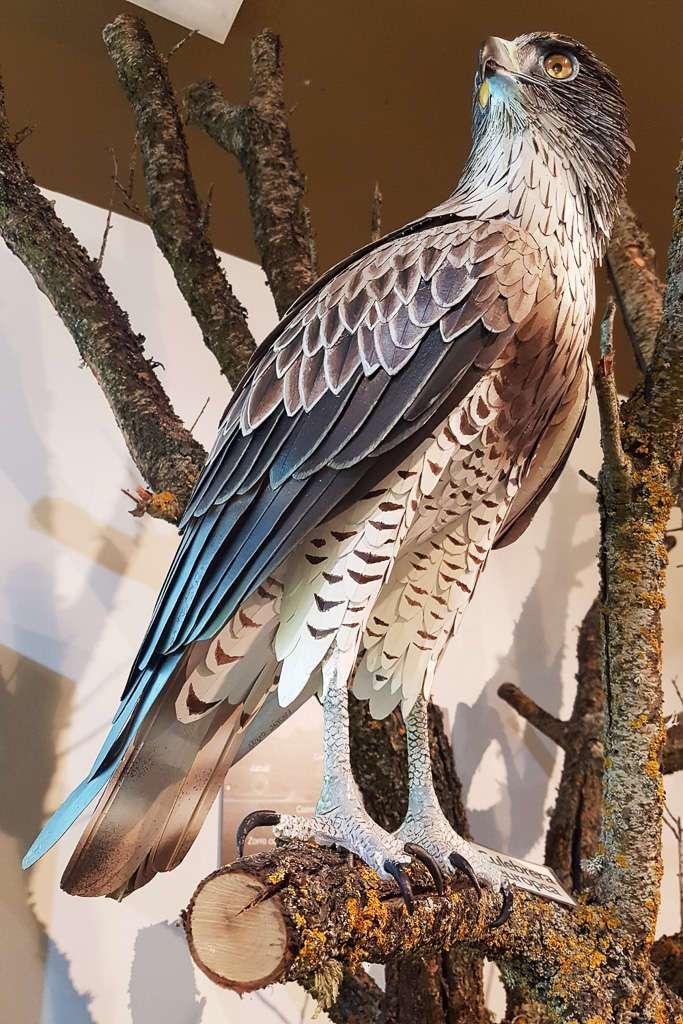 Águila en el Centro Cultural Félix Rodríguez de la Fuente en Poza de la Sal