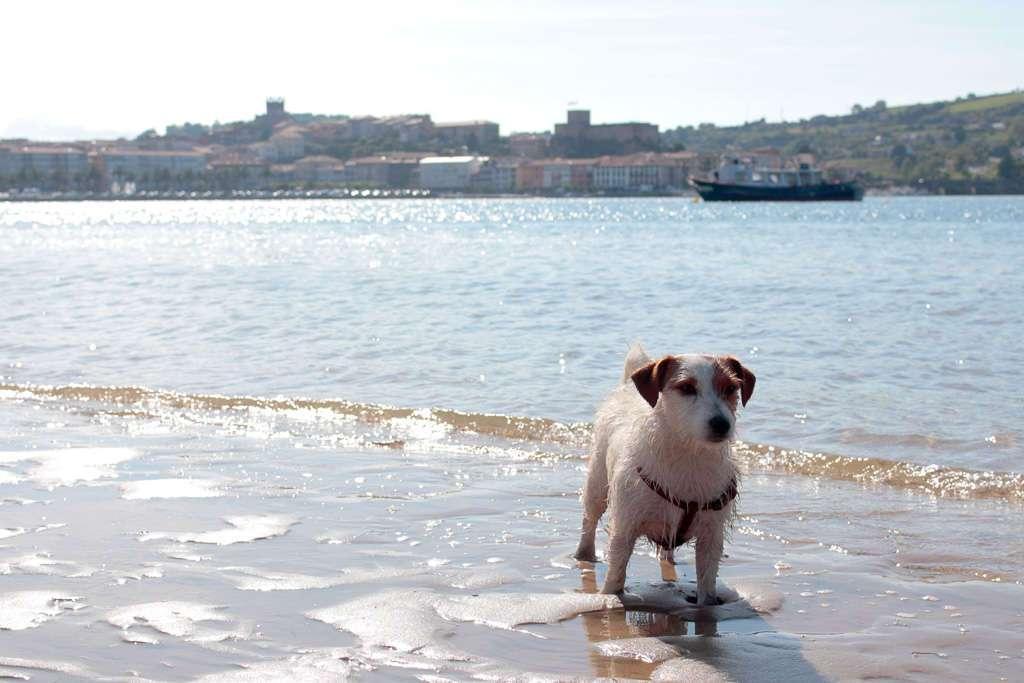 Amy en la orilla de la playa para perros de San Vicente de la Barquera