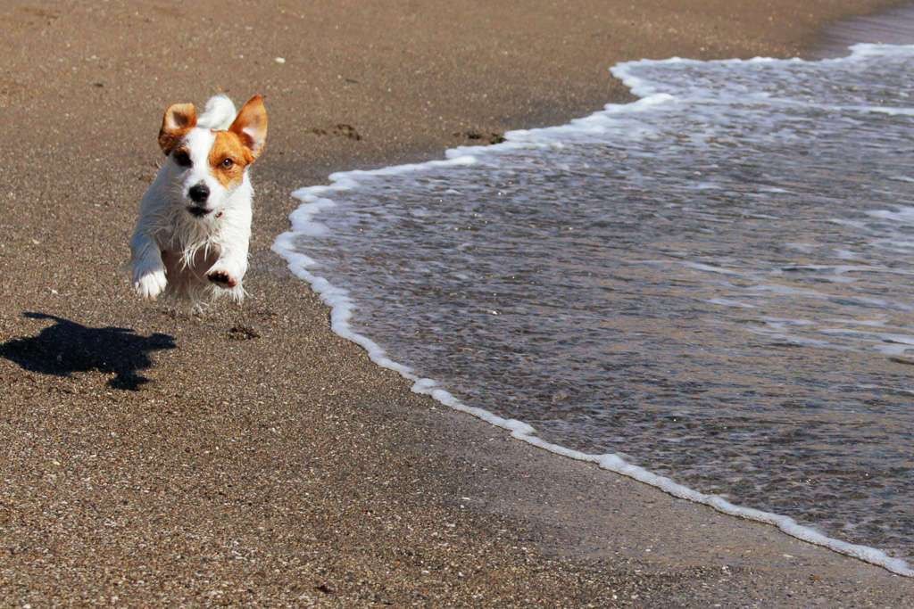 Amy corriendo en la playa