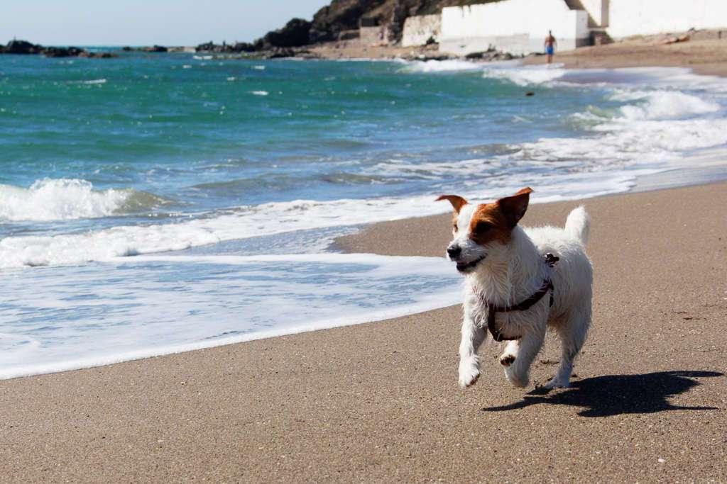Amy corriendo en la playa del Castillo de Fuengirola