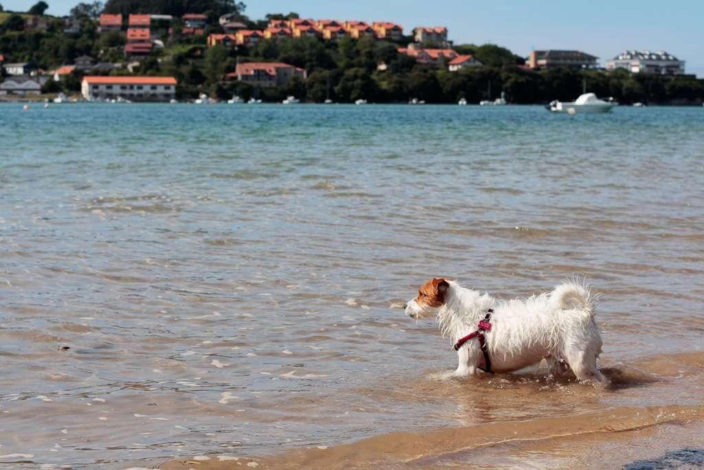 Amy entrando en el agua
