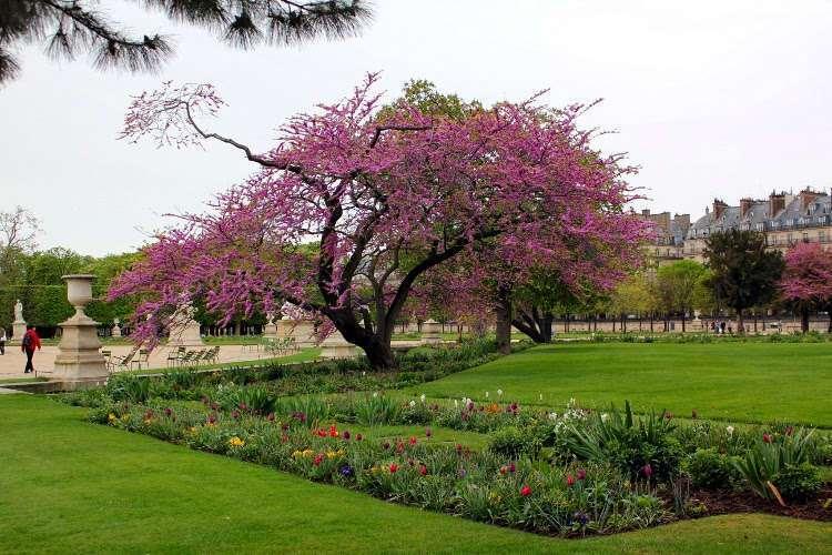 Árbol en el jardín de las Tullerías