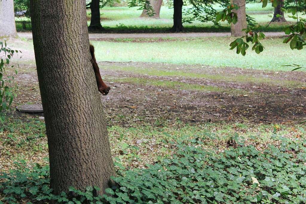 Una ardilla en el Parque Łazienki