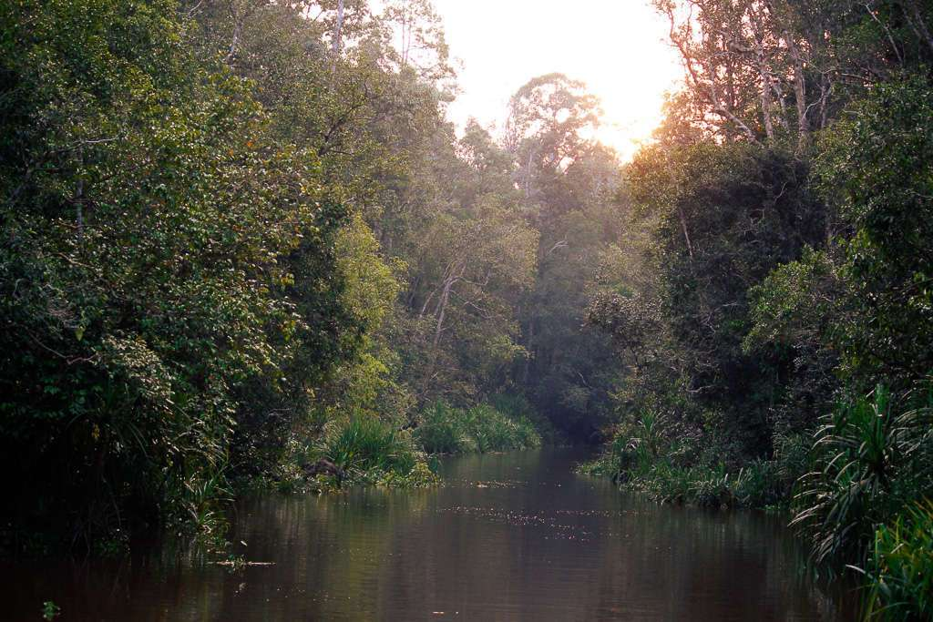 Atardeciendo en la selva de Borneo