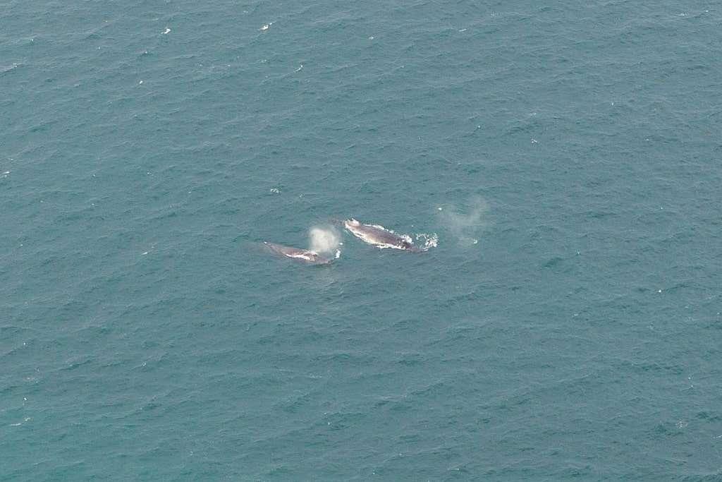 Ballenas en False Bay vistas desde Cape Point, Península del Cabo, Sudáfrica