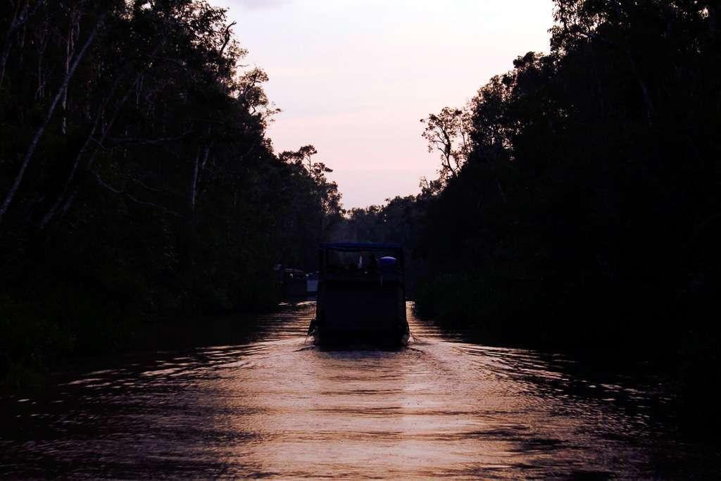 Atardecer en la jungla de Borneo