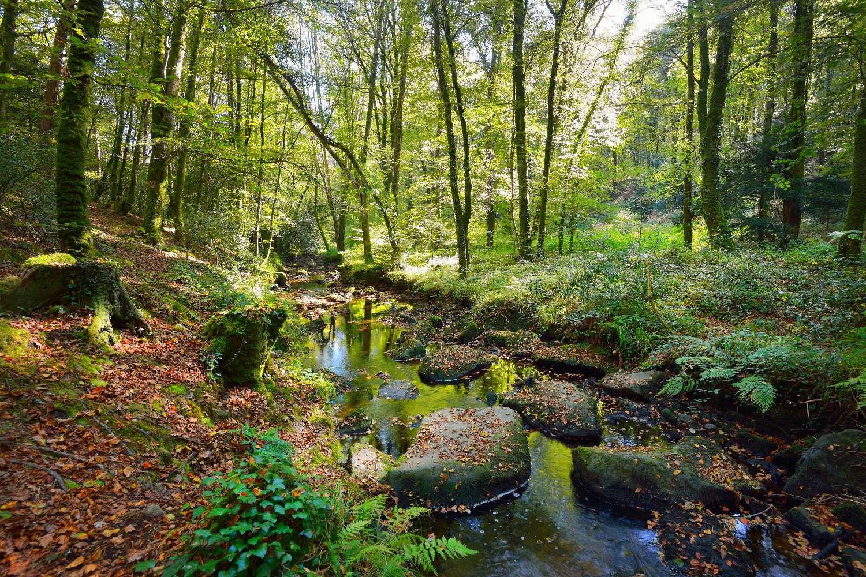 Bosque bretón