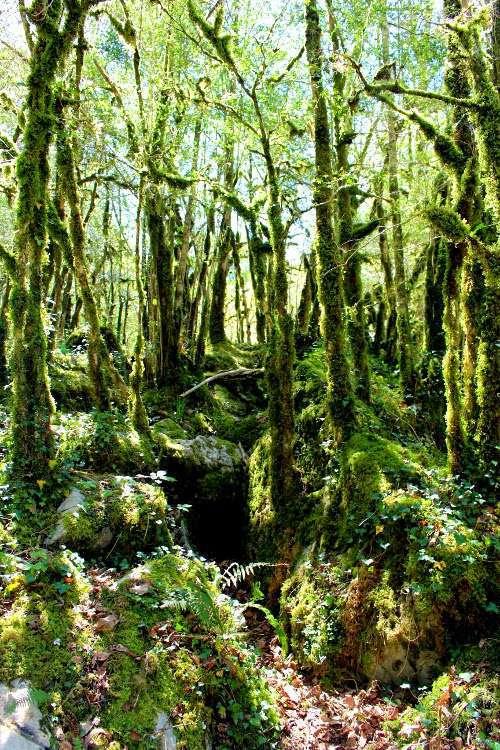 Árboles en la Garganta de Kakueta (Gorges de Kakuetta)