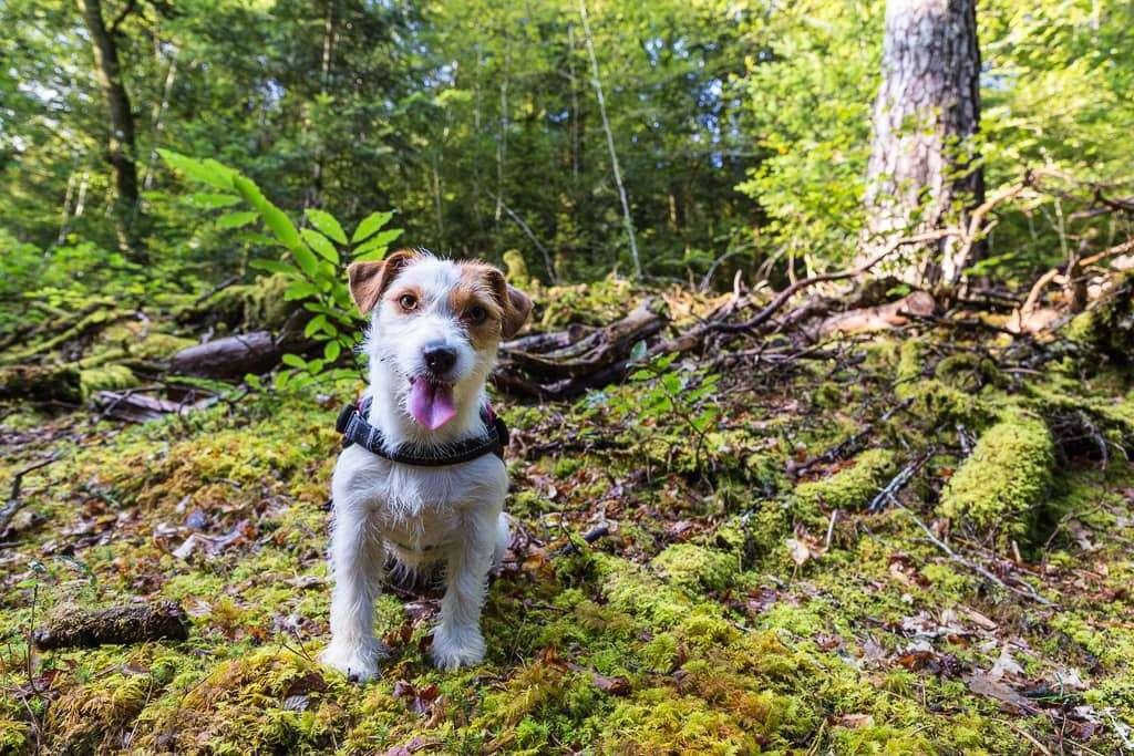 Bosque de Huelgoat en la Bretaña francesa