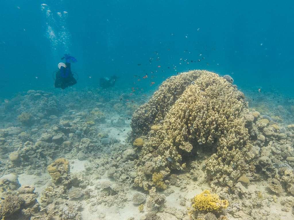 Corales enormes en el Japanese Garden, Aqaba, mar Rojo, Jordania