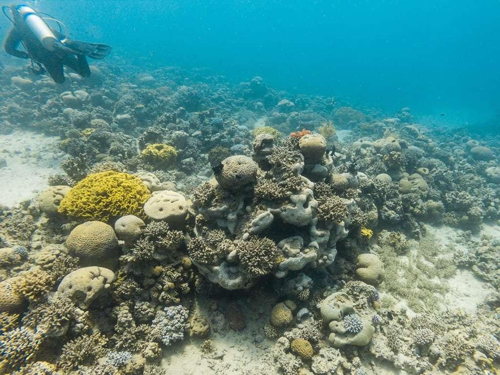 Corales de colores en el Japanese Garden, Aqaba, mar Rojo, Jordania