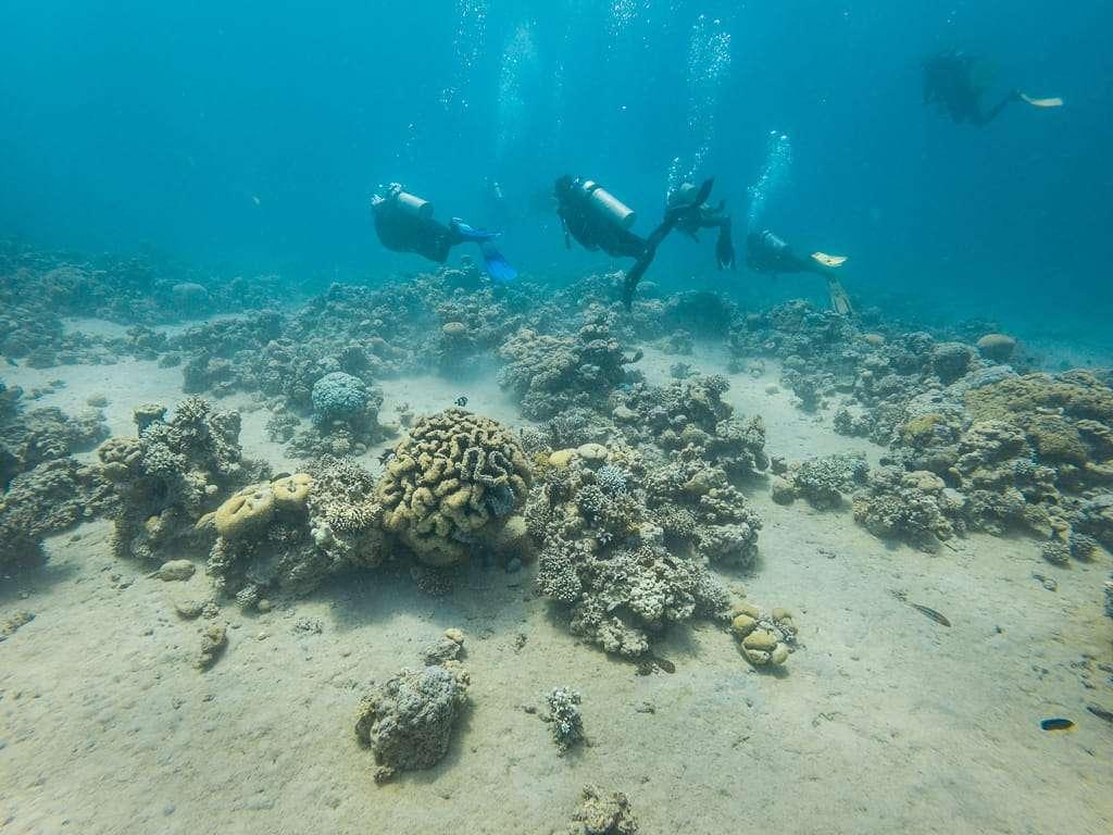 Cruzando corales en el Japanese Garden, Aqaba, mar Rojo, Jordania