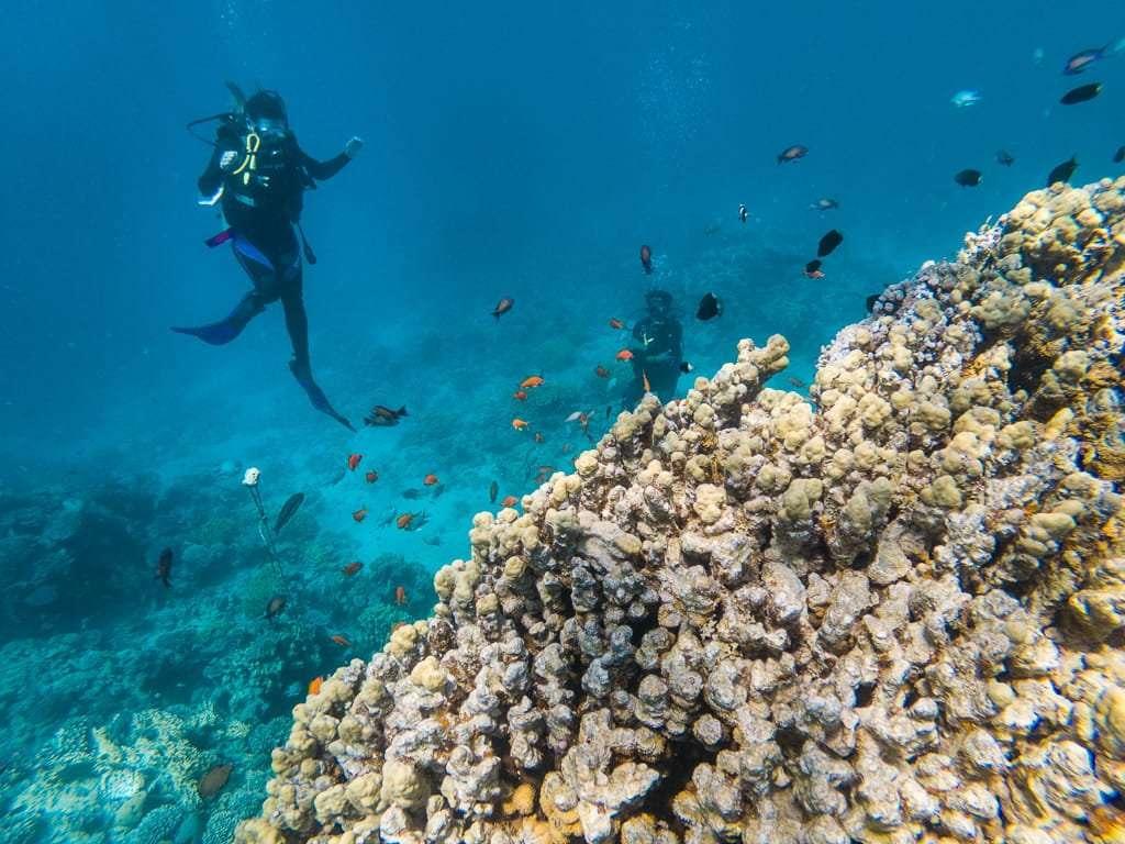 Primer plano corales Japanese Garden, Aqaba, mar Rojo, Jordania