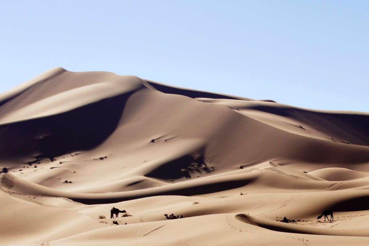 Camellos en Erg Chebbi, el Sahara de Marruecos