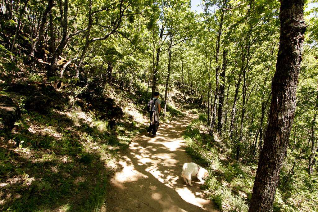 Amy y Alberto a la sombra de los árboles
