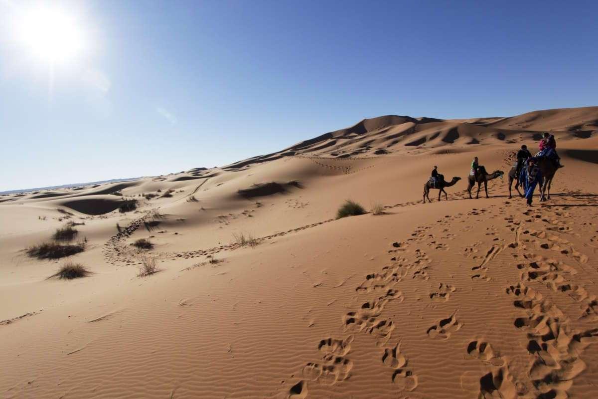 Caravana de camellos en las dunas del desierto de Marruecos