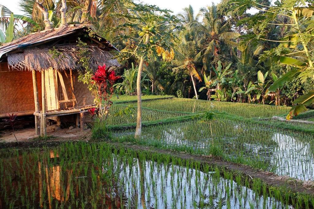 Casa en los arrozales de Ubud