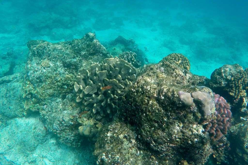 Corales en Gili Trawangan