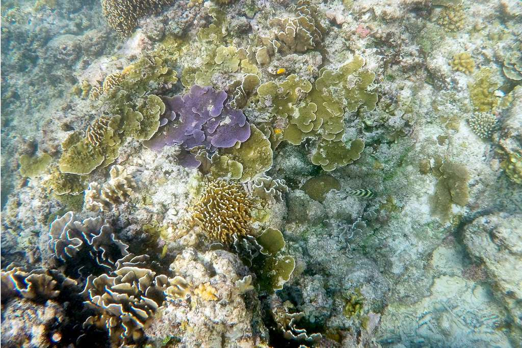 Corales de varios colores en Gili Trawangan