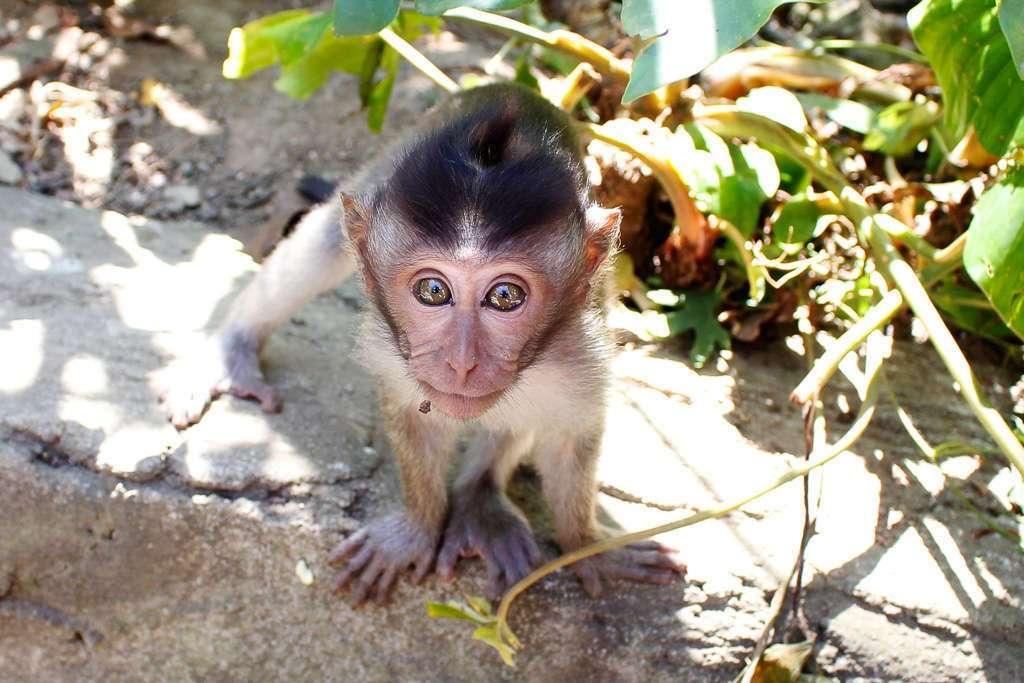 Un monete pequeño mirándonos en el Monkey Forest