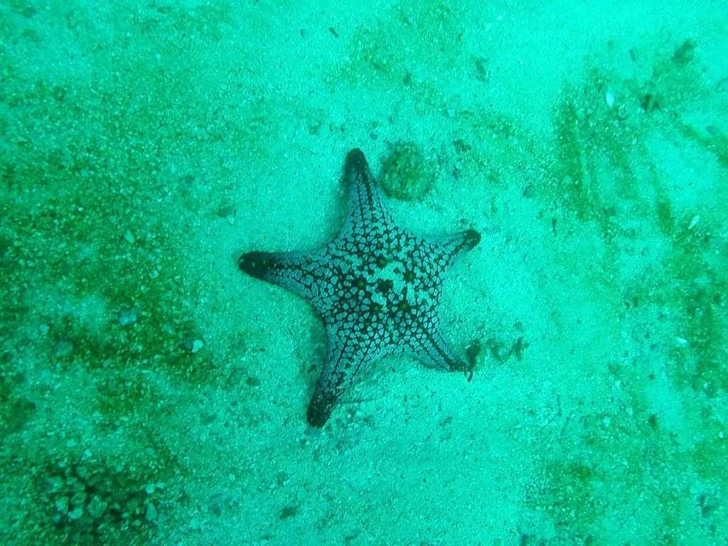 Una estrella de mar en el oceáno Pacífico