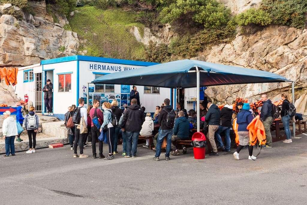 Explicación previa al avistamiento de ballenas en Hermanus Sudáfrica