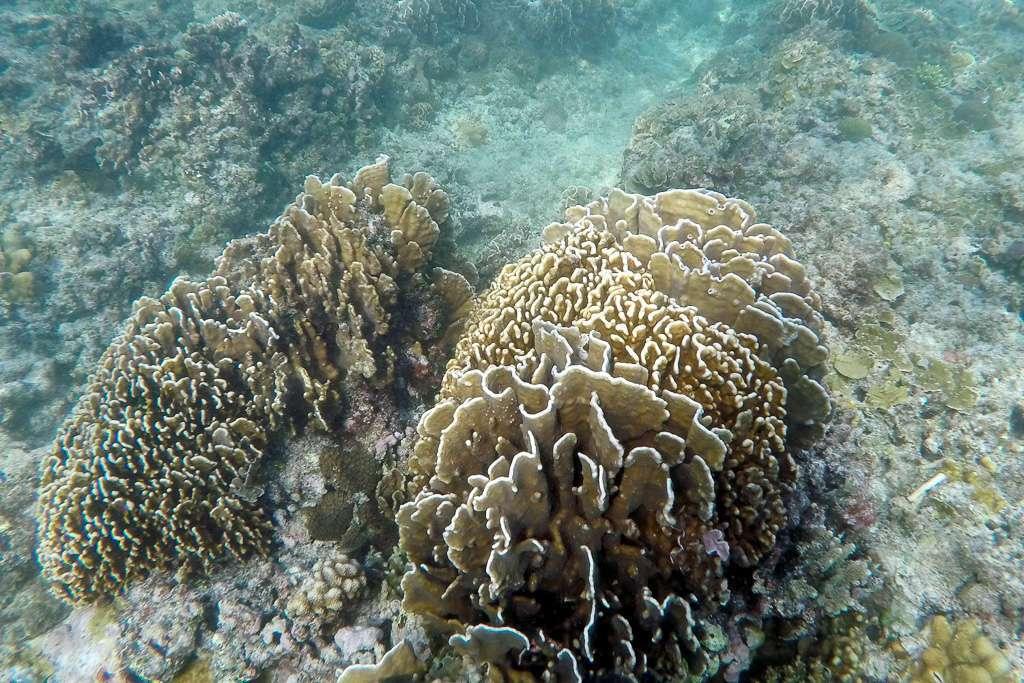 Corales con formas curiosas en Gili Trawangan