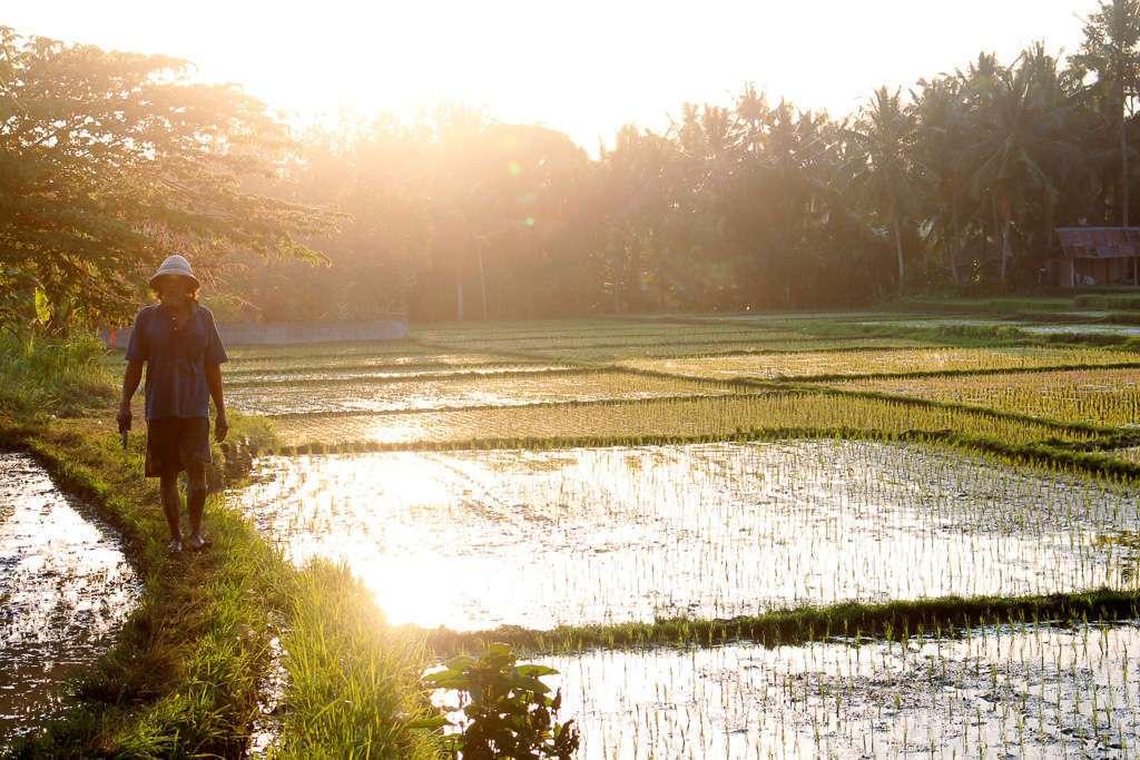 Un campesino en los arrozales de Ubud