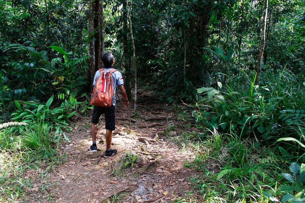 Nuestro guía en el camino hacía la zona de alimentación de orangutanes