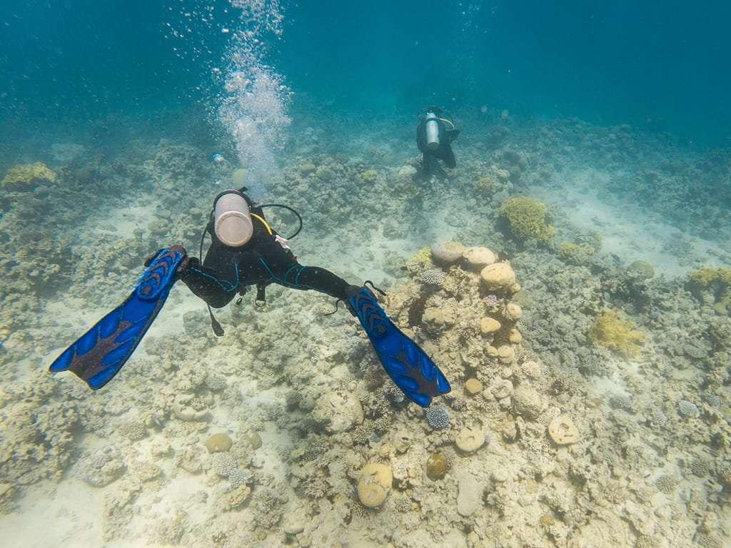 Entre corales en el Japanese Garden, Aqaba, mar Rojo, Jordania
