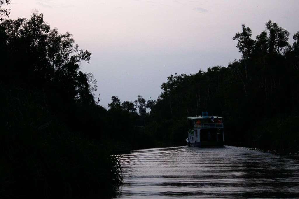Anocheciendo en la jungla de Borneo