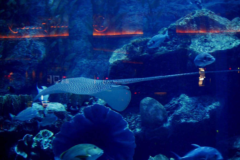Una mantarraya del acuario del Dubai Mall