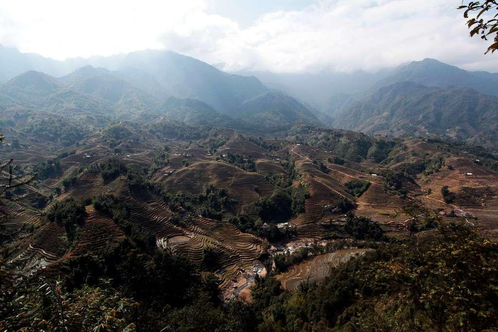 Terrazas de arrozales en Sapa