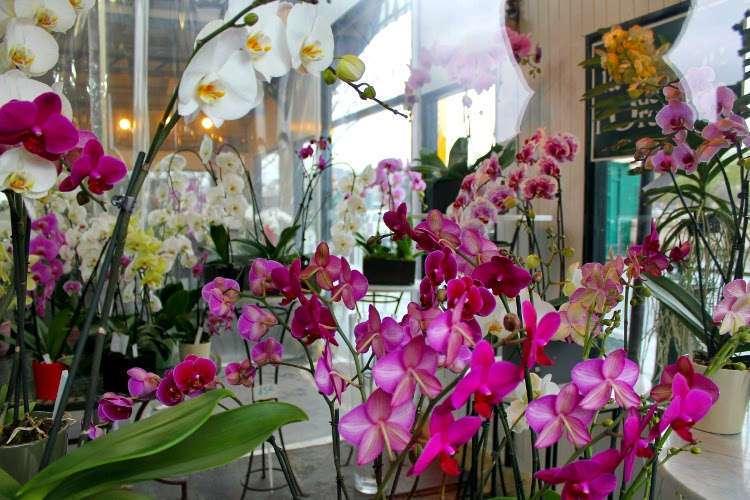 Orquídeas en el Mercado de las flores