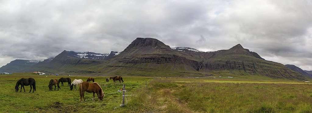 Panorámica de los fiordos del este con caballos islandeses