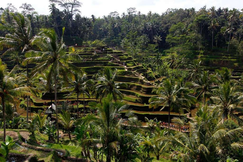 Hilera de personas subiendo por las terrazas de Tegalalan