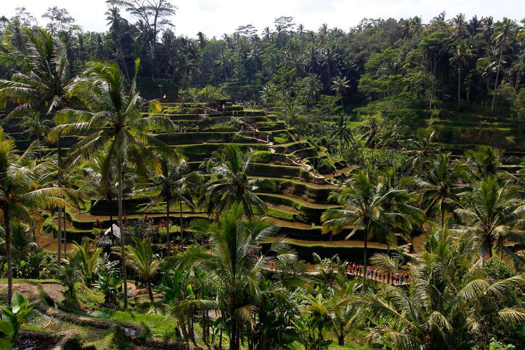 Panorámica de los arrozales de Tegalalan, Bali