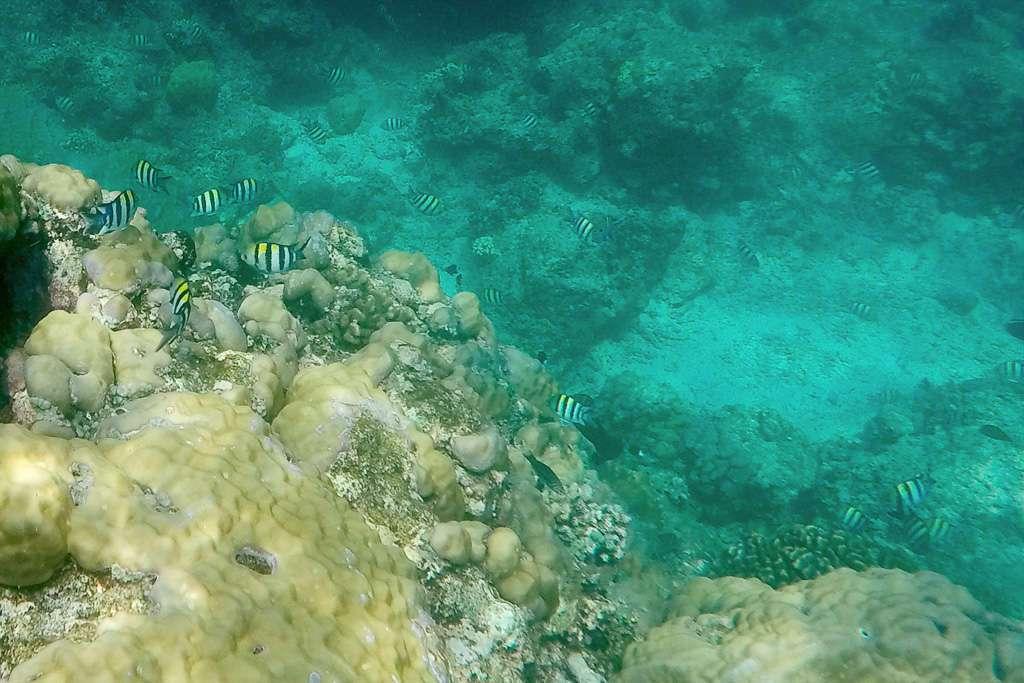 Unos cuantos peces a rayas en las costas de Gili Trawangan