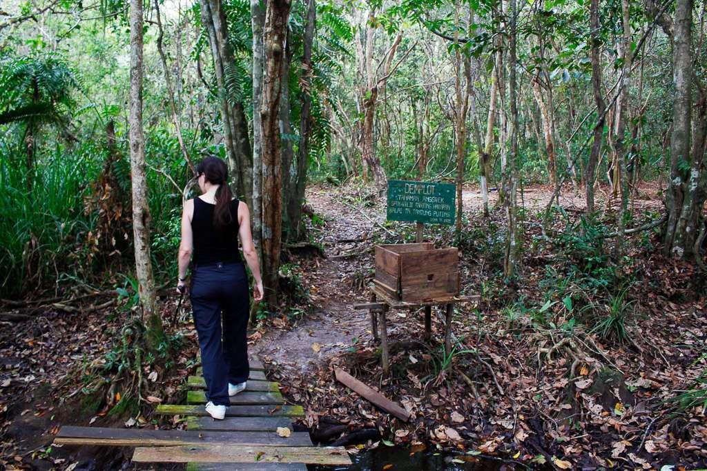 Nuestros primeros pasos en la jungla de Borneo