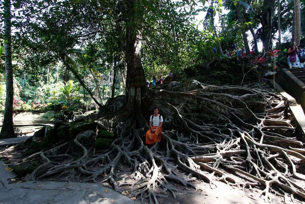 Las raíces de un árbol centenario en  Goa Gajah