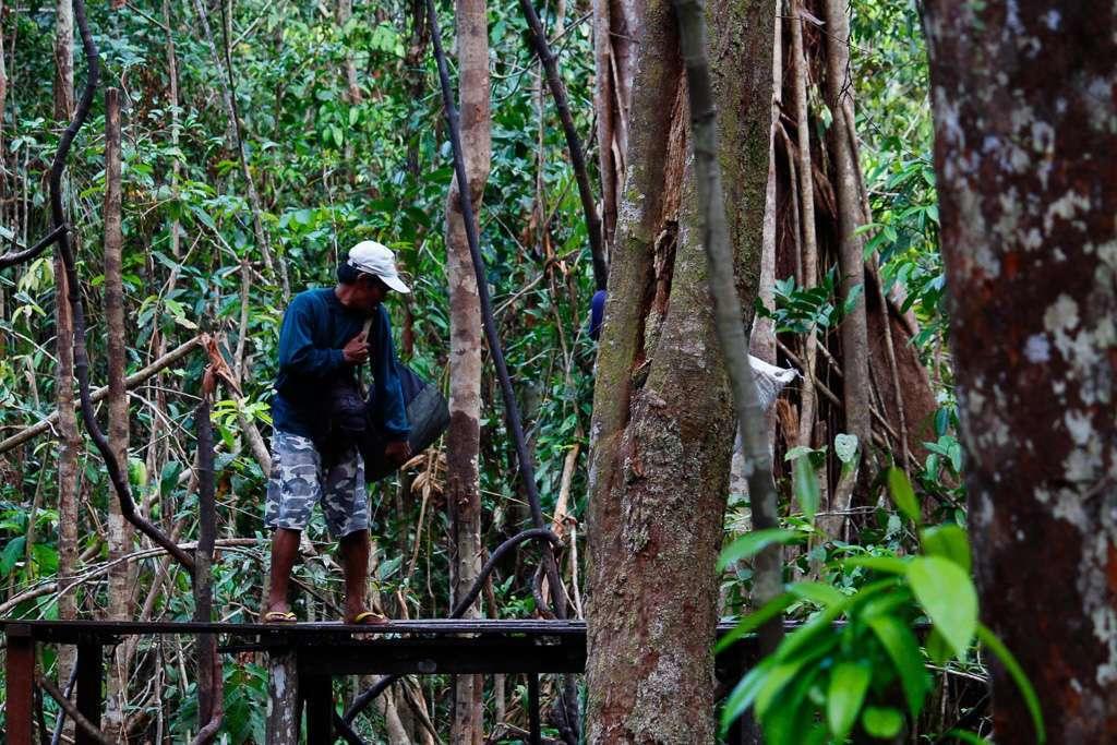 Los rangers llevando comida a las plataformas de alimentación