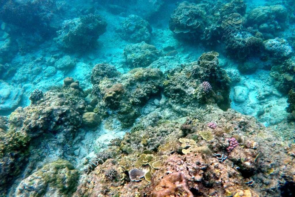 El fondo del mar en Gili Trawangan