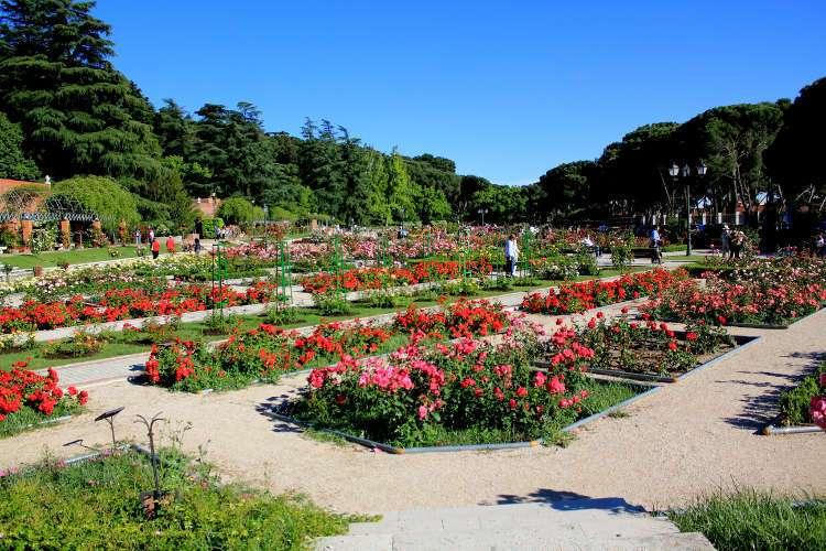 Rosaleda del Parque del Oeste (Madrid)
