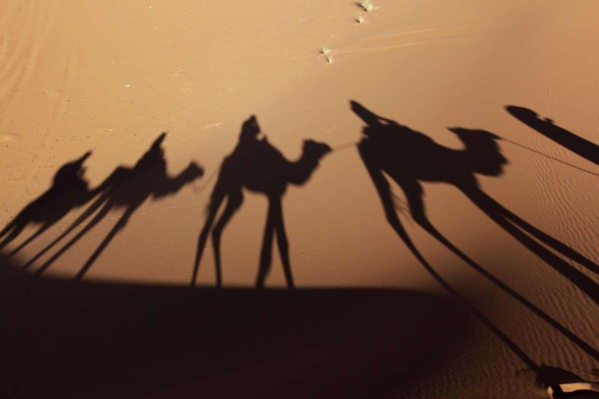 Sombras de la caravana de camellos en el desierto de Marruecos
