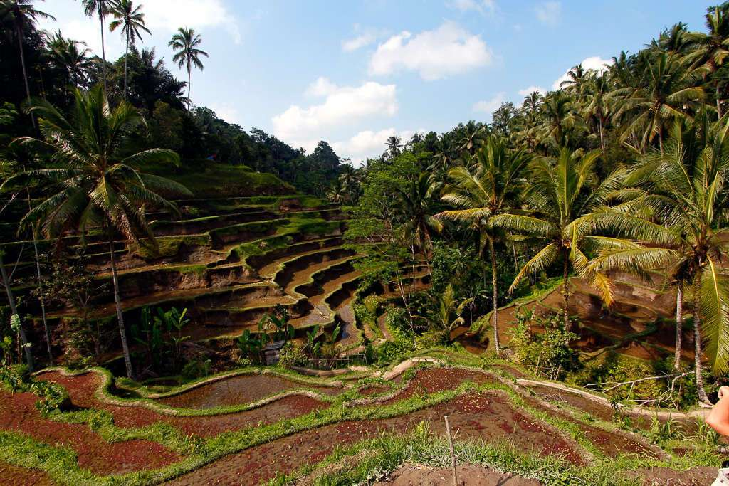 Vista de la terraza de Tegalalan