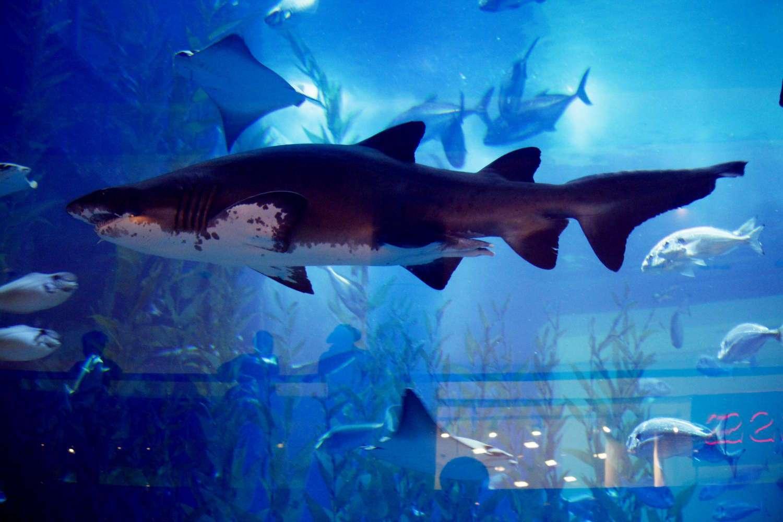 Un tiburón del acuario del Dubai Mall