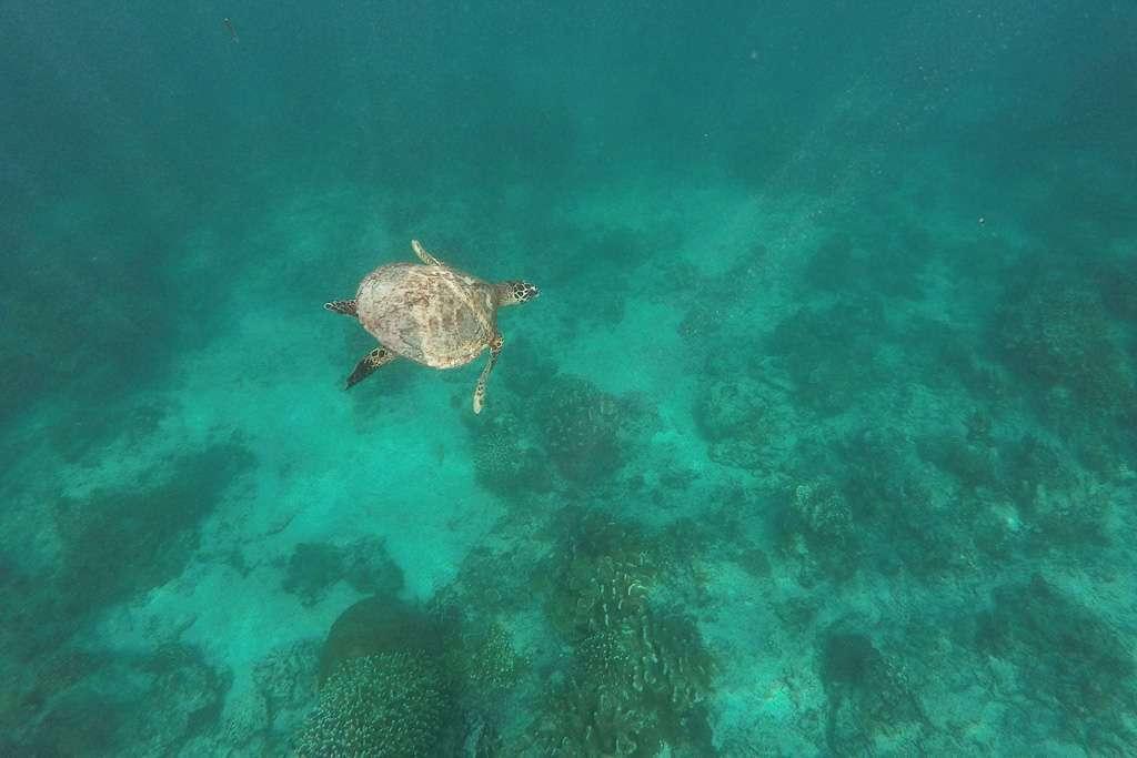 Tras las tortugas marinas de Gili Trawangan