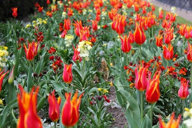 Flores en los Jardines de Luxemburgo