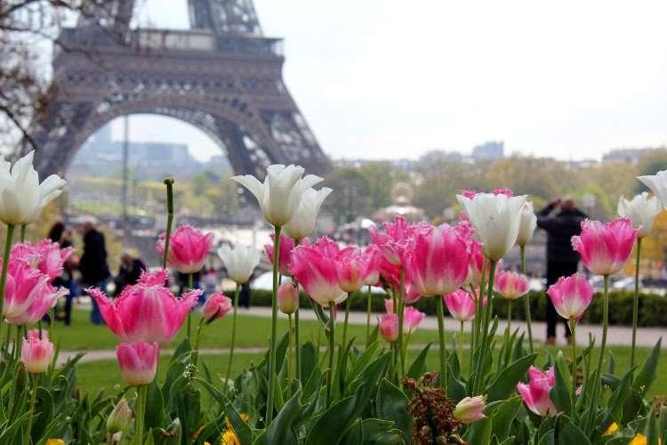 Tulipanes de Trocadero y la Torre Eiffel